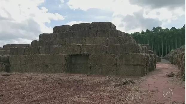 Fábrica de papel a partir da palha da cana tem produção sustentável