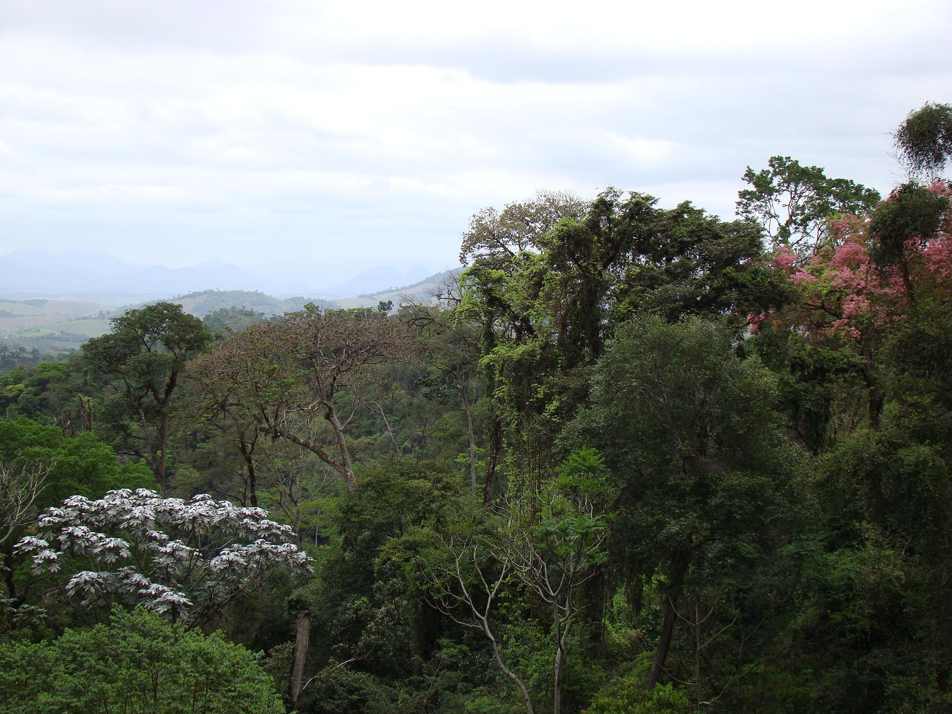 Conheça os projetos que estão ajudando a ampliar a cobertura florestal do ES